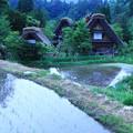 写真: 飛騨白川そして初夏