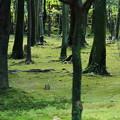 写真: 今,木立ちの中で