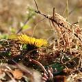 Photos: 春はそこまで(2)