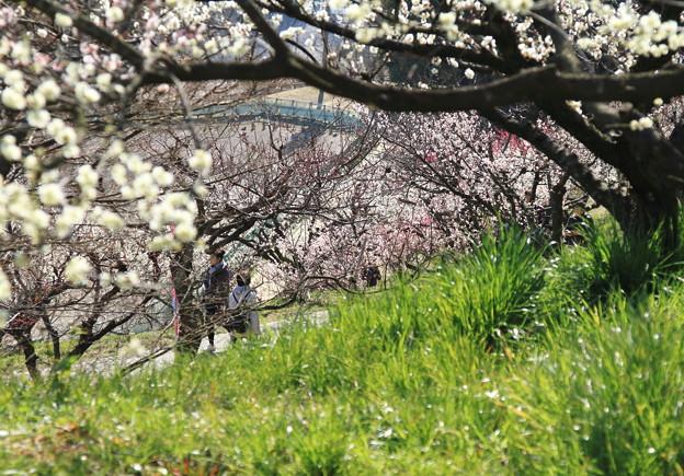 花と人の佐布里(そうり)-1