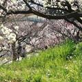 Photos: 花と人の佐布里(そうり)-1