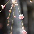 写真: 熱海梅園180224-02