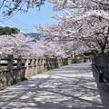 Photos: 月見川の桜 2