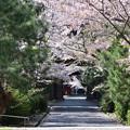 Photos: 東光寺参道