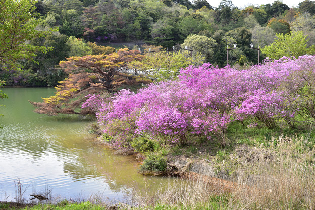 写真: 江汐湖