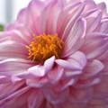 写真: 花摺り