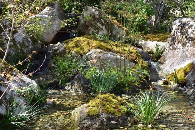 流れのある庭