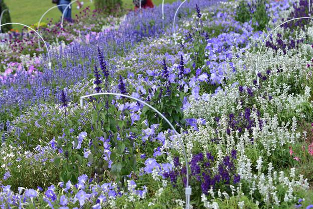 花の谷ゾーン 1