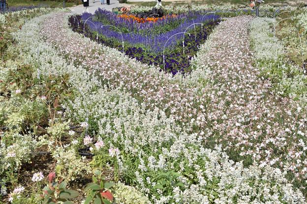 花の谷ゾーン 2