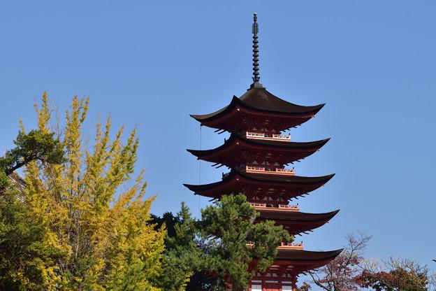 公孫樹と五重塔
