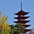 写真: 公孫樹と五重塔