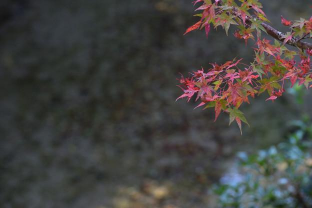 Photos: 川面を背景に