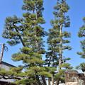 写真: 九本松