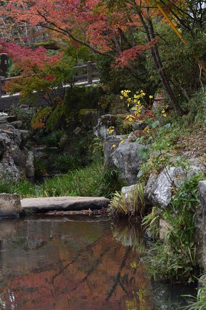 小川の紅葉
