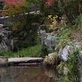 写真: 小川の紅葉