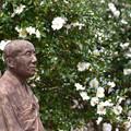 写真: 山茶花に囲まれて