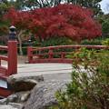 写真: 赤い橋と紅葉