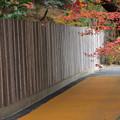 写真: 芝生広場への道