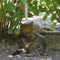 Photos: 猫 1