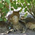 Photos: 猫 3