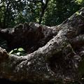 Photos: 倒木に
