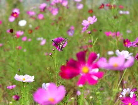 Photos: 花に首ったけ!