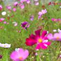 写真: 花に首ったけ!