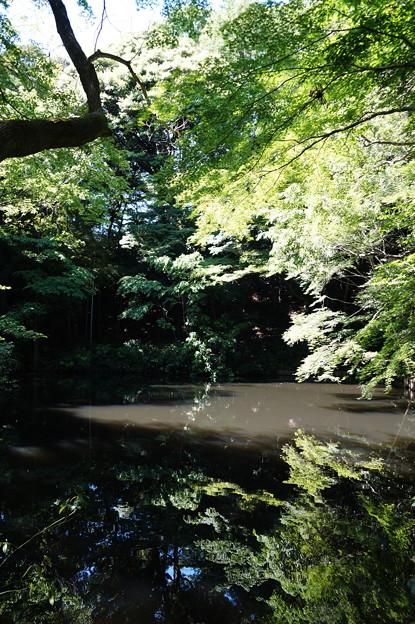 小金井 滄浪泉園 2