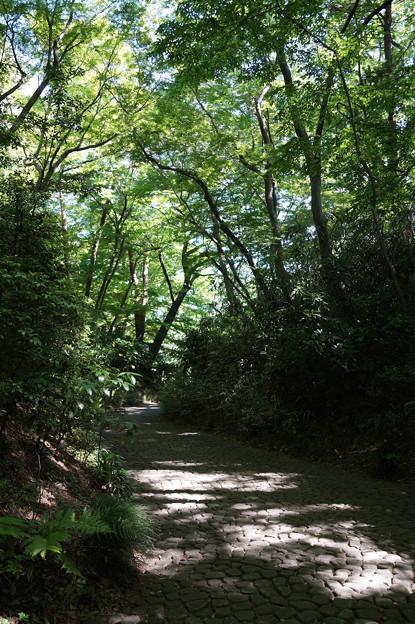 小金井 滄浪泉園 3