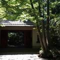 小金井 滄浪泉園 4