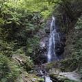 檜原村 払沢の滝