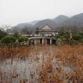 Photos: 天龍寺・放生池