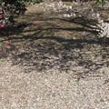 散り梅&散り椿