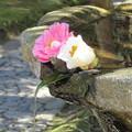 法然院・手水鉢1