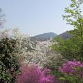 春の里山風景5