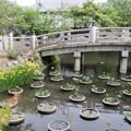金戒光明寺・兜の池