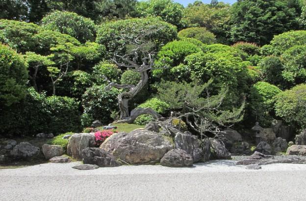 金地院・鶴亀の庭園(亀島)1