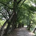 大覚寺・大沢池(遊歩道)