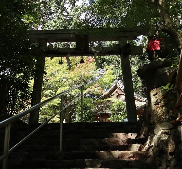 写真: 猿丸神社・表参道2