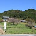 写真: 禅定寺全景
