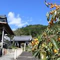 Photos: 禅定寺・参道3