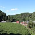 Photos: 茶畑風景4