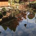 白沙村荘・瑞月池1