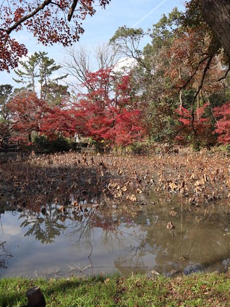 晩秋の植物園2