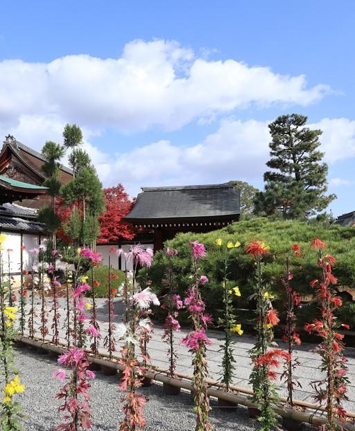 大覚寺・玄関前庭