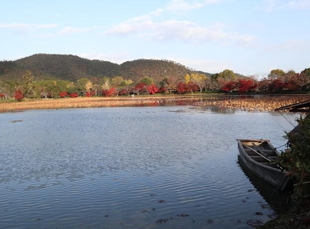 大覚寺・大沢池1