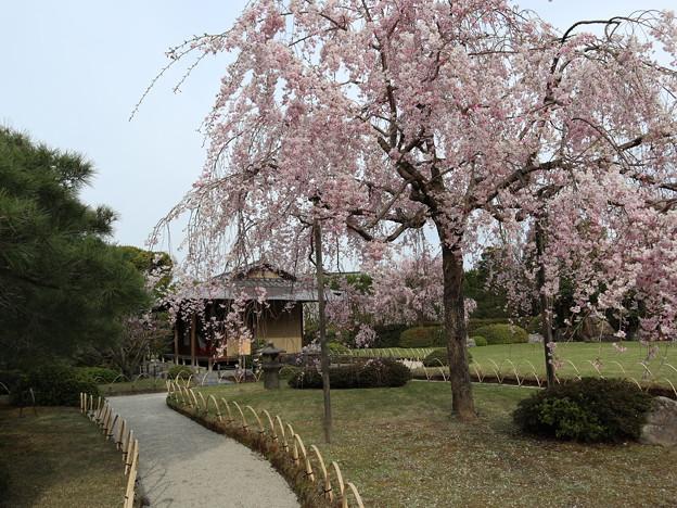 城南宮・桃山の庭5