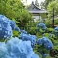 三千院・紫陽花苑8