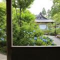 三千院・紫陽花苑7