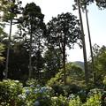 三千院・紫陽花苑11